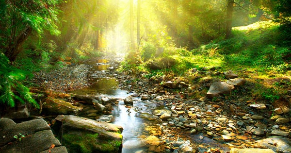 Peaceful Forest for Mindfulness Image