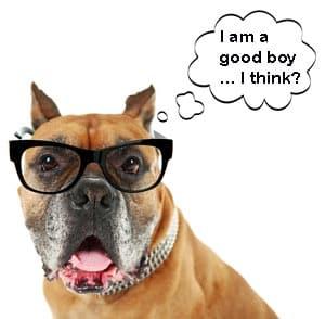 Good Dog Concept Image