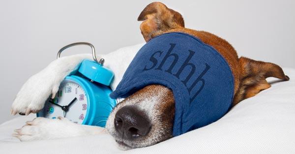 Power Nap with Dog Image
