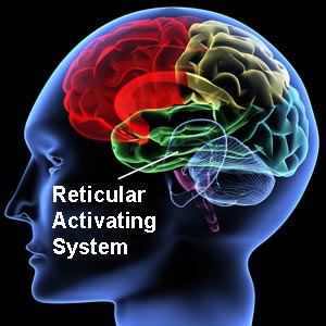 Reticular Activating System Image