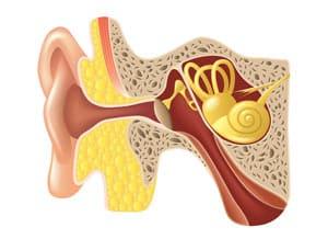 inner ear diagram